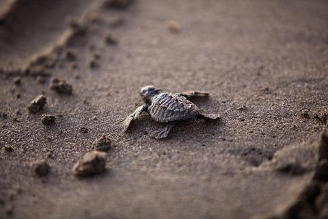 sea-turtle-356125_1280 (1)
