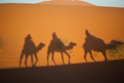 camels-897658_1280