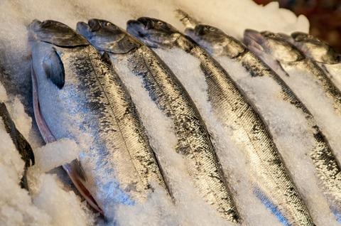 fish-market-1115073_1280 (1)