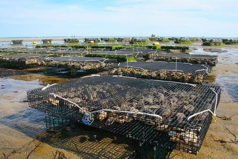 oyster-farm-1404177_1280 (1)