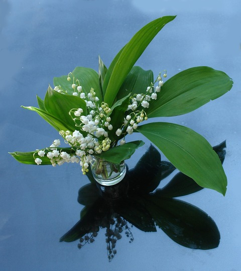 lily-of-the-valley-2012817_1920 (1)