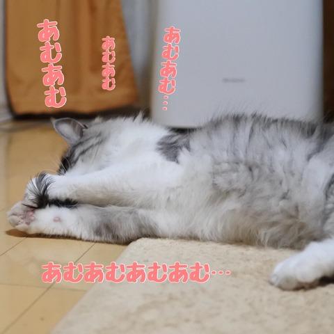 IMG_4133