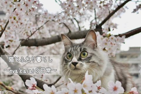 IMG_7261