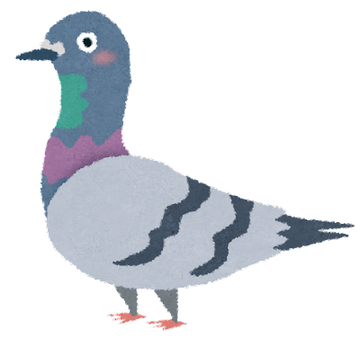 bird_hato