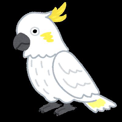 bird_kobatan