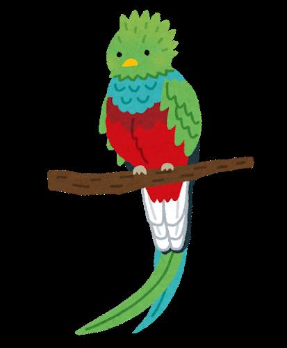 bird_quetzal