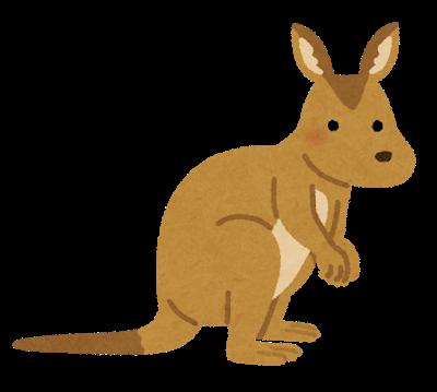animal_wallaby_kangaroo
