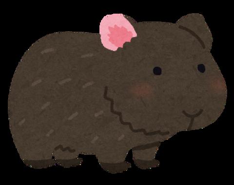 animal_marmot_black