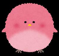 maruitori_pink