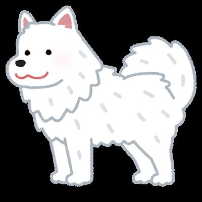 dog_samoyed