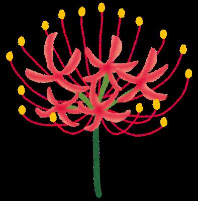 flower_higanbana