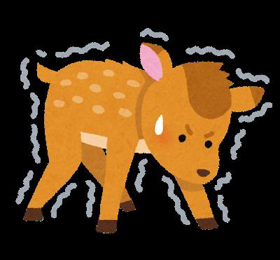 animal_umaretate_kojika
