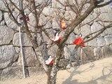 木になる人形