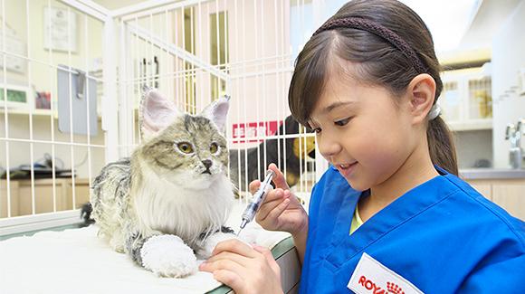 ゲンダイ「なぜ加計学園は獣医学部に執着したのか」のサムネイル画像