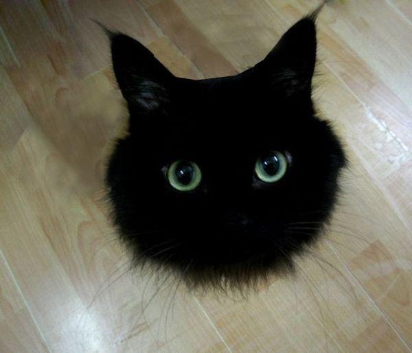 猫を飼いたい 黒猫で目の大きい可愛い子が欲しい(動画と画像)のサムネイル画像