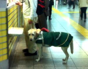 盲導犬を連れた視覚障害者がタクシーに「車内が汚れる」と乗車拒否、問題にのサムネイル画像