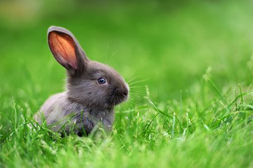 【悲報】空輸中の巨大ウサギ死亡、所有者がユナイテッド航空を提訴へのサムネイル画像