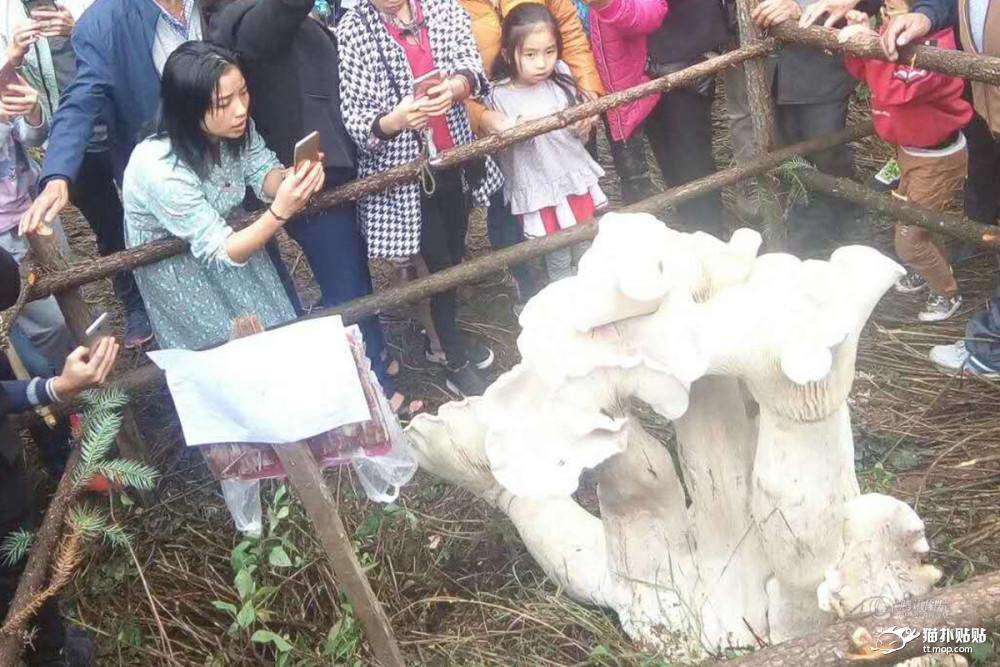 【衝撃】中国の山の中で恐ろしいキノコが育ってしまう・・・・・のサムネイル画像