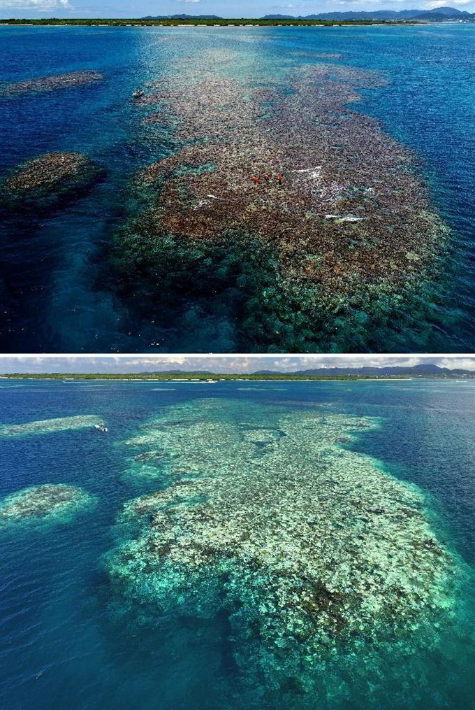 【画像】沖縄のサンゴ礁、死滅・・・のサムネイル画像