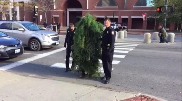 【悲報】交差点で「木」にコスプレして立っていた男が、交通を妨げた罪で逮捕されるwwwwwwwwwwwwwのサムネイル画像