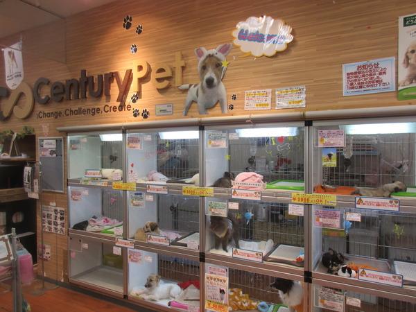 【悲報】イギリスでもぺットショップでの子犬や子猫の販売禁止か・・・のサムネイル画像