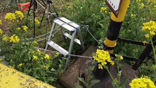 菜の花を踏み荒らして場所取りした撮り鉄に真岡鉄道「撮り鉄はもう来ないで」のサムネイル画像
