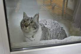 【悲報】青森県民、灯油値上がりで「冬を越せない」と悲鳴wwwwwwwwwwwwwww のサムネイル画像
