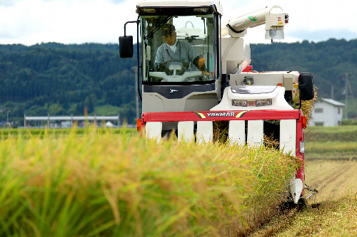 福島で怪しいお米を収穫開始のサムネイル画像