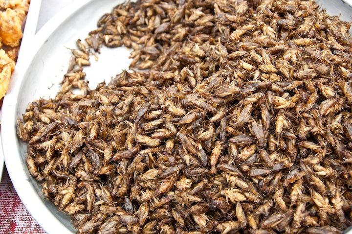 【食】カナダ「昆虫食はすでに日常」のサムネイル画像