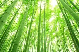 【驚愕】公園の竹30本が何者かに伐採!!→ 犯人の正体がwwwwwwwwwwwwwwwwwのサムネイル画像