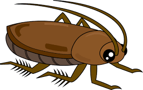 【驚愕】アメリカで「ゴキブリ」が数千匹、大行進へ・・・のサムネイル画像