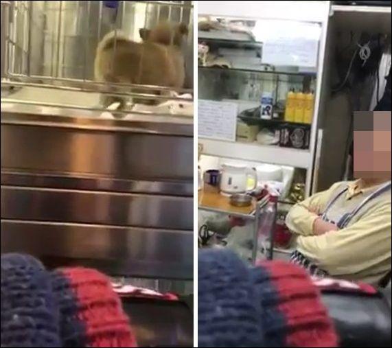 【YouTube】関東連合の元幹部、動物虐待疑惑の店を訪問して店員を恫喝、顔を無断撮影!動画で晒し者に・・・のサムネイル画像