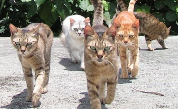 ネコは自ら人間と暮らし始めた? DNA分析で判明のサムネイル画像