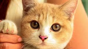 【超絶悲報】ネコに噛まれ女性が死亡・・・のサムネイル画像