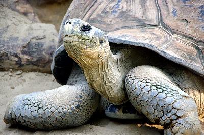 動物園から脱走したゾウガメに懸賞金50万をかけた結果wwwwwwwwwwwwwのサムネイル画像