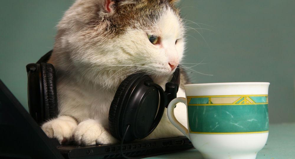 【動画】ネコのための音楽アルバムが発売wwwwwwwwお前ら試してみろwwwwwwwのサムネイル画像