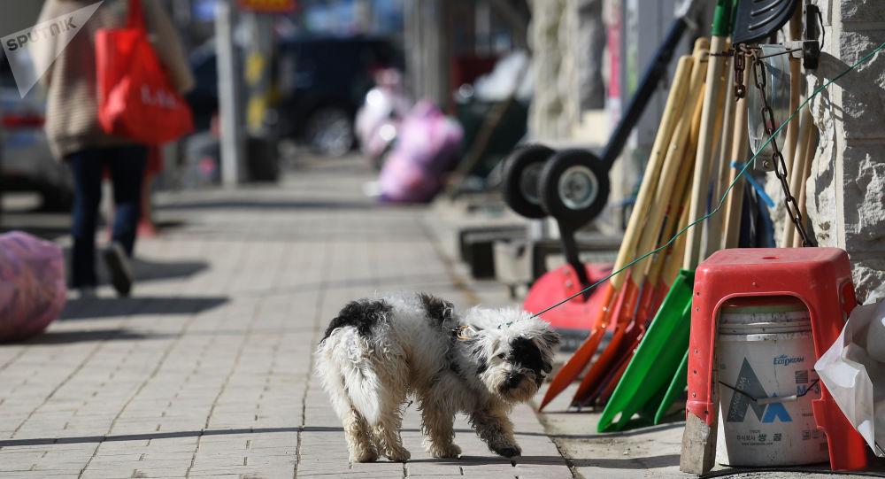 【韓国】平昌市内のほぼすべてのカフェ、犬肉禁止令を軒並み無視へwwwwwwwwwwwwwwwのサムネイル画像