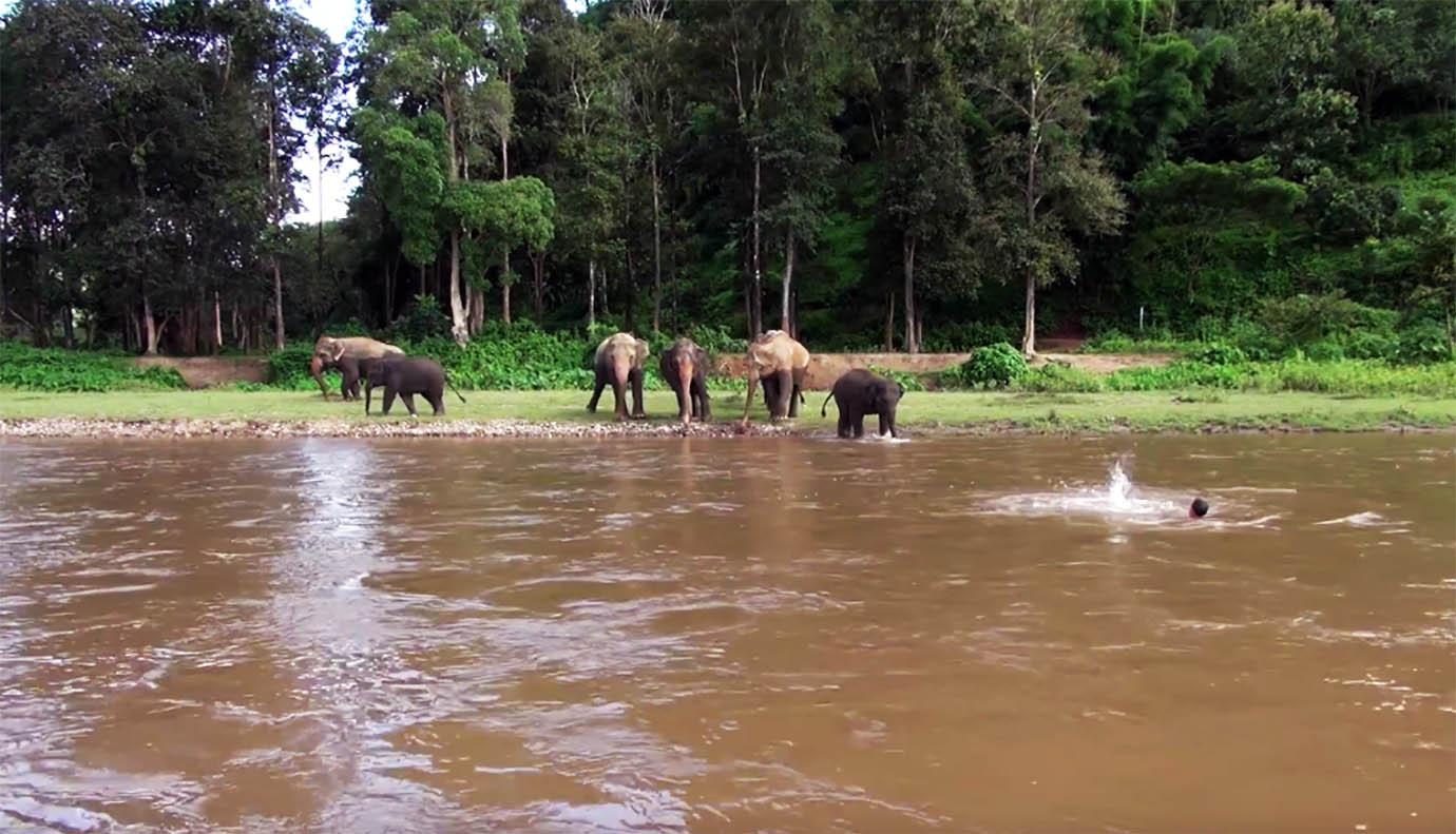 【感動】人間が川で溺れてると勘違いした小象が救助に向かう動画に、世界中の人々から感動の声・・・ のサムネイル画像
