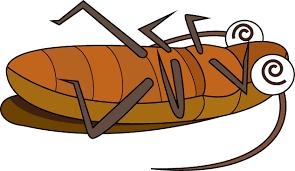 【※閲覧注意】宅配ピザにゴキブリが混入 → 丸焦げで他の具材と見分けが付かないwwwwwwwwwwのサムネイル画像