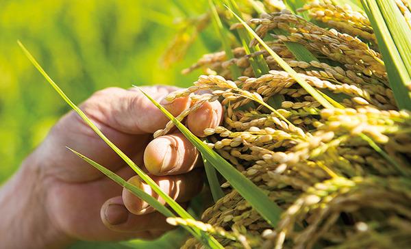 【悲報】 安倍政権、ひっそり「主要農作物種子法」廃止へwwwwwwwwwwwwwwwwのサムネイル画像