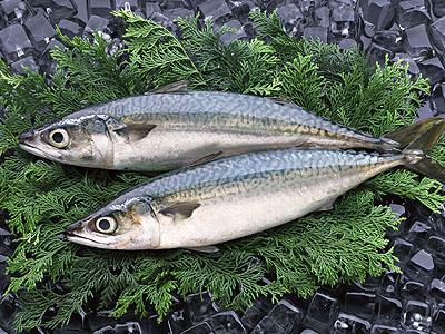 【悲報】日本人の魚離れが深刻 → その一方・・・のサムネイル画像