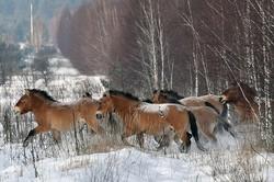 【悲報】野生の馬、絶滅の模様のサムネイル画像