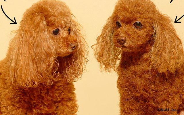 【ペットロス】悲しみ癒す超リアルな『クローンワンコ』 →  お値段なんと300万円から のサムネイル画像