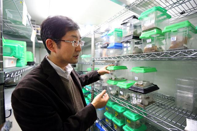 【昆虫食】粉末コオロギはエビの味!昆虫学者、商品化へ研究中「たこ焼きにかけると美味いんです」 のサムネイル画像
