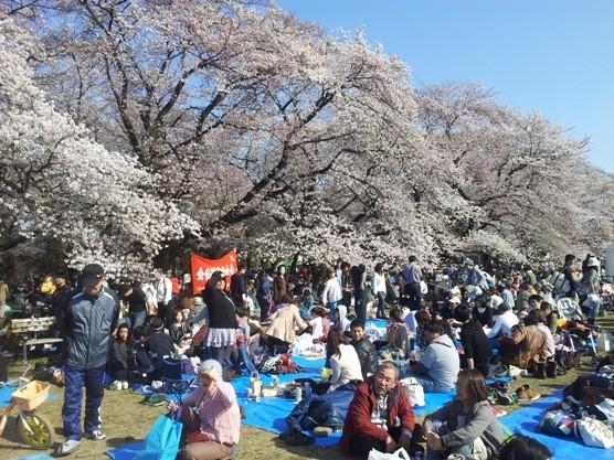 【狂気】韓国観光公社「日本人さん、今年の花見はぜひ韓国でどうぞ」のサムネイル画像