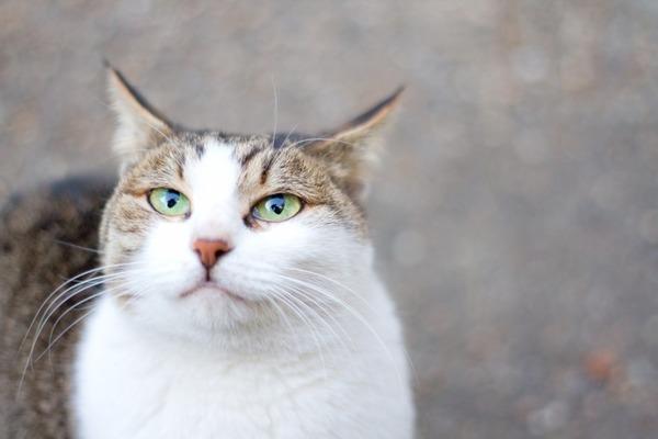 【衝撃】背中が切り裂かれ内臓がはみ出た猫が発見される・・・のサムネイル画像