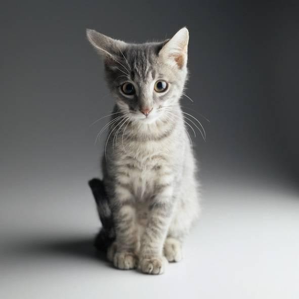 「ネコがあなたを本気で殺そうとしている8つのサイン」怖すぎワロタwwwwwwwwwwwwwのサムネイル画像
