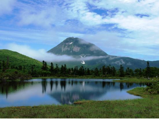 アライグマ「知床半島にやってきたのだ!ここで繁殖するのだ!」のサムネイル画像