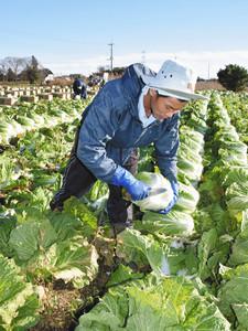 【国家戦略特区】外国人の農業労働 厳しい労働環境での失踪 派遣労働形態への懸念のサムネイル画像