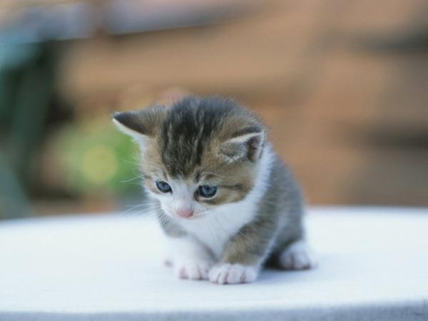 【兵庫】子猫を殴り殺した、神戸の老人を逮捕「家の周りで野良猫がふんをして邪魔だった」のサムネイル画像